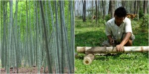 bamboo maker