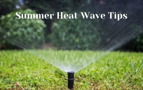 Summer Heat Wave Tips